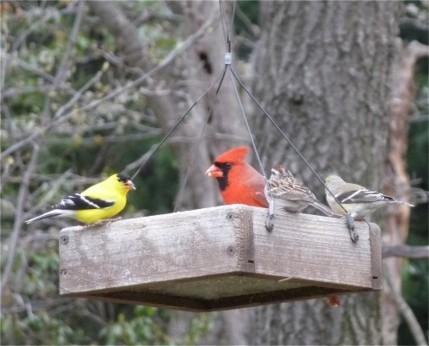 all-birds-together