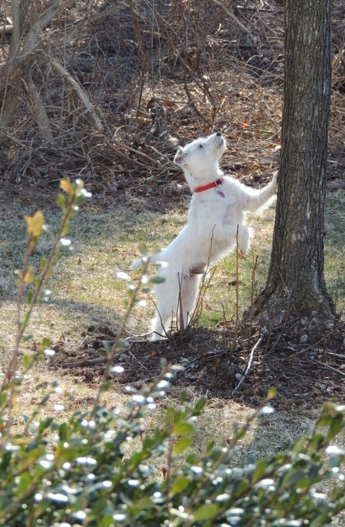 treeing-squirrel-a-2