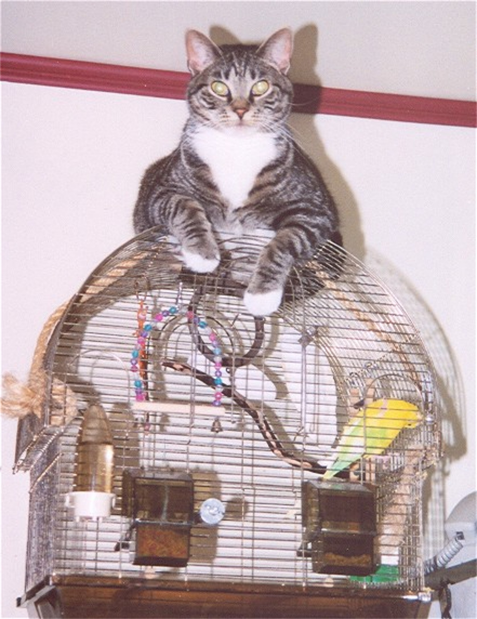 cat on cage