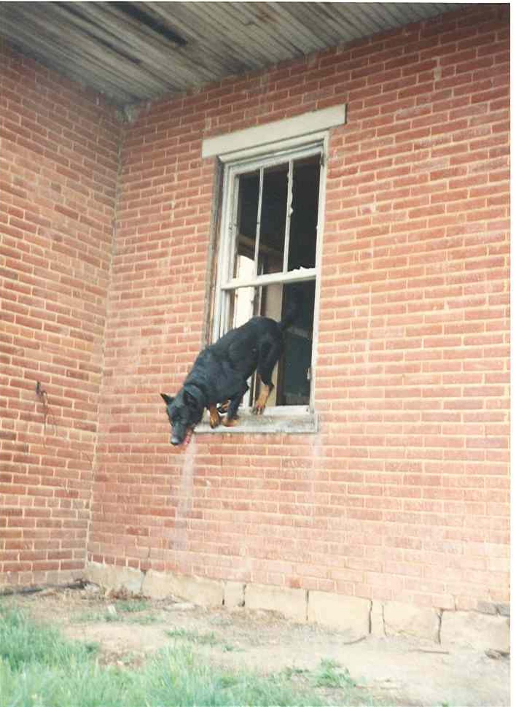 Scout SAR training window