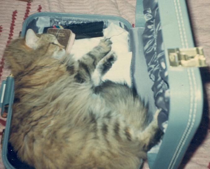 puff suitcase